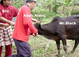 Raya Korban Razzi Rahman